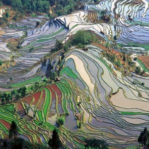Terrace field in Yunnan China