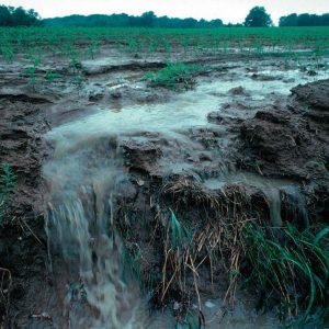 Nutrient pollution caused by Surface runoff of soil and fertilizer during a rain storm (1999)