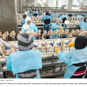 Poultry workers cut and trim chicken