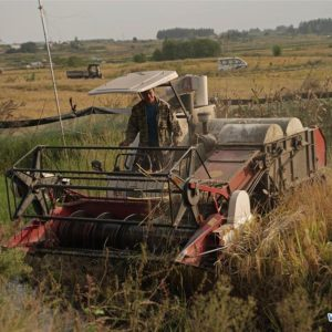 A farmer operates a harvester to reap rice in a field at Xiaogang Village in Fengyang County, east China's Anhui Province, on Sept. 27, 2018