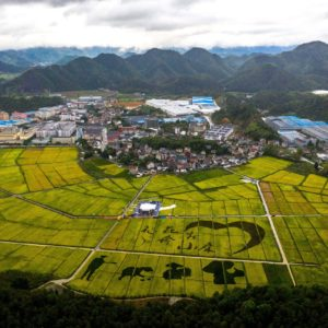 Rice fields in Jiande city, Zhejiang province, Sept 17, 2020