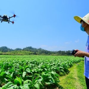 A drone applying pesticide on a field in Huichang, Jiangxi province