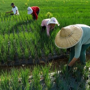 China expanding agricultural cooperation with Belt and Road countries